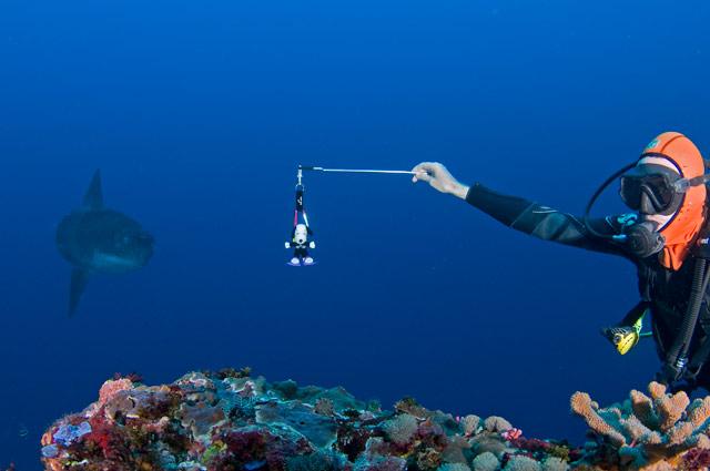 Mola Mola Bali Diving