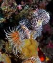 Scuba Diving : East Timor Offers Everything That a Scuba Diver can possibly Want to See